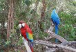Birds at Dolphin Cove