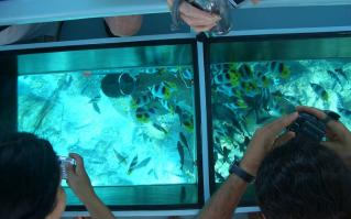 Glass bottom boat marine view